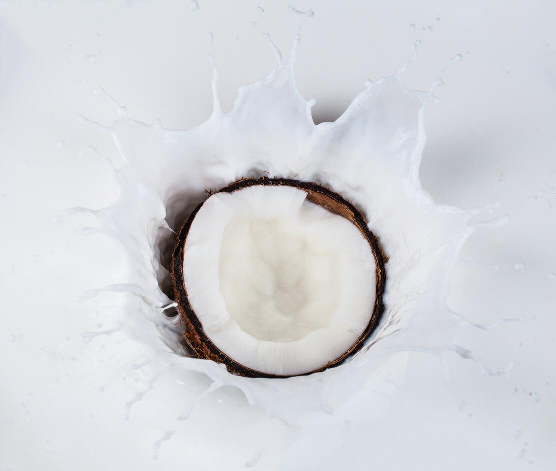 Coco e seus derivados: benefícios na manutenção e fortalecimento da imunidade